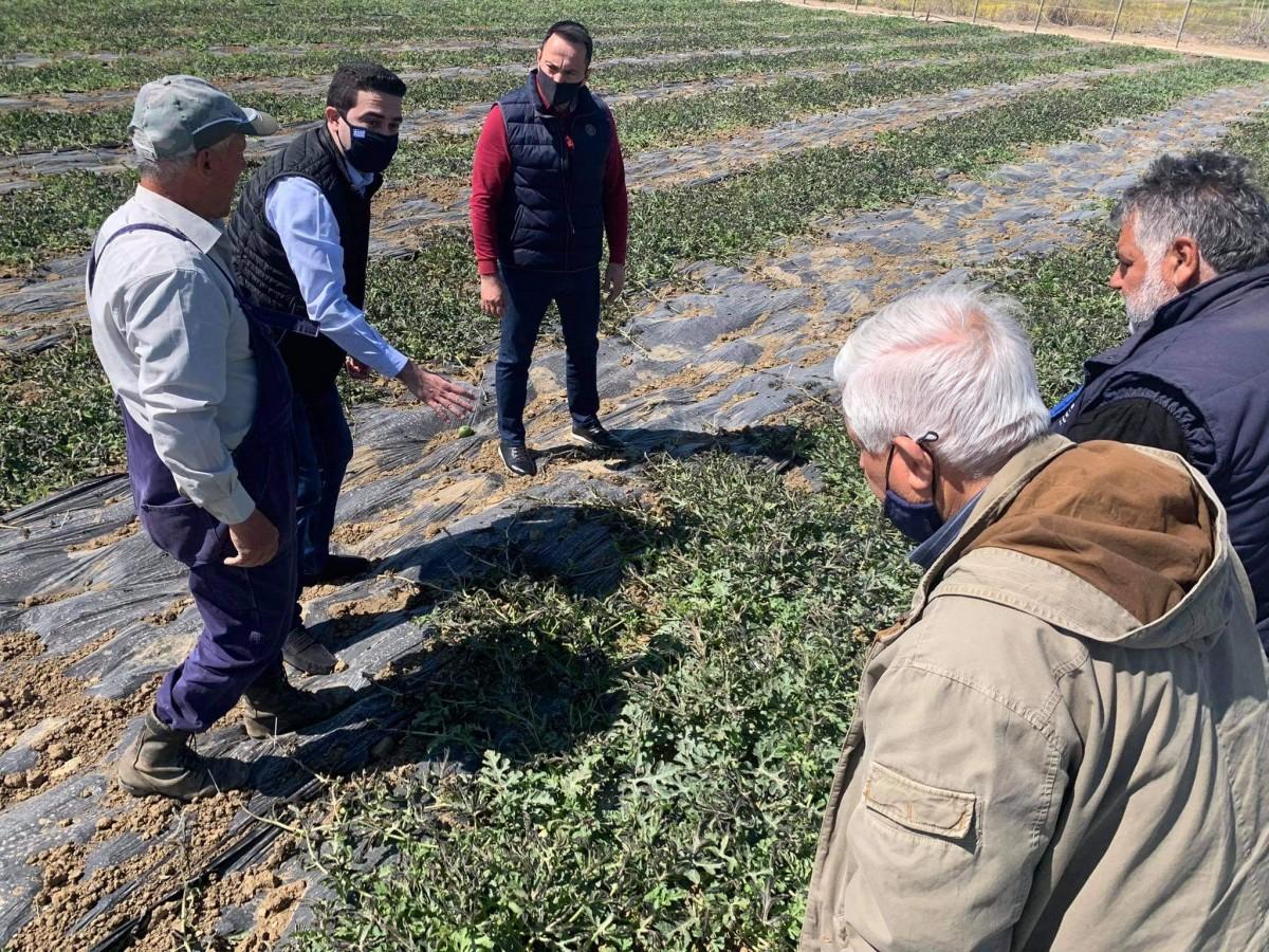 ''Σε αδιέξοδο οι αγρότες της Ηλείας- Άμεσες διαδικασίες για να δοθούν αποζημιώσεις από τον παγετό.''